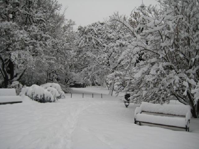 Автор были белее снега свадебные цветы